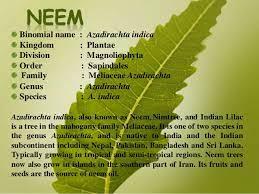 Gyan Neem